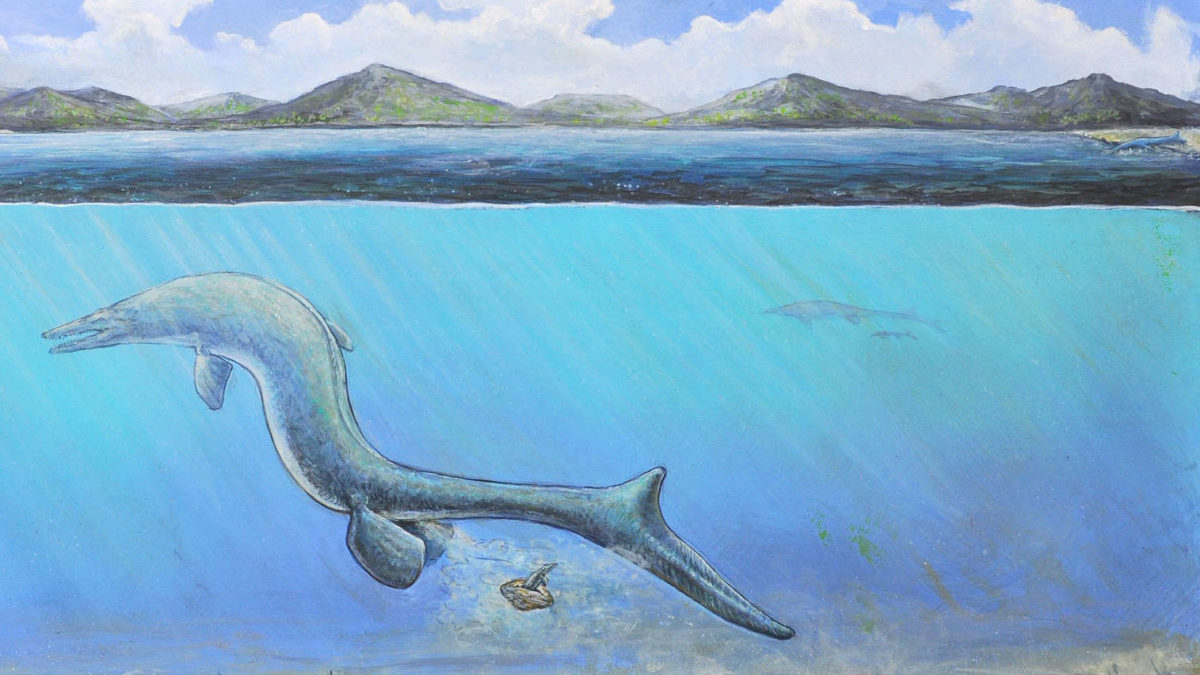 cc43129aa9a4dfec01d3d946ef716adc-6 Antarctic sea lizard laid mystery fossil named 'The Thing'