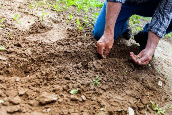 soil, land, environment